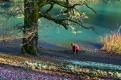 Colesbourne_Lake